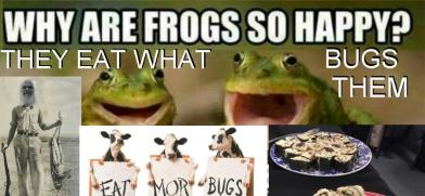 _Frogs_Bugs