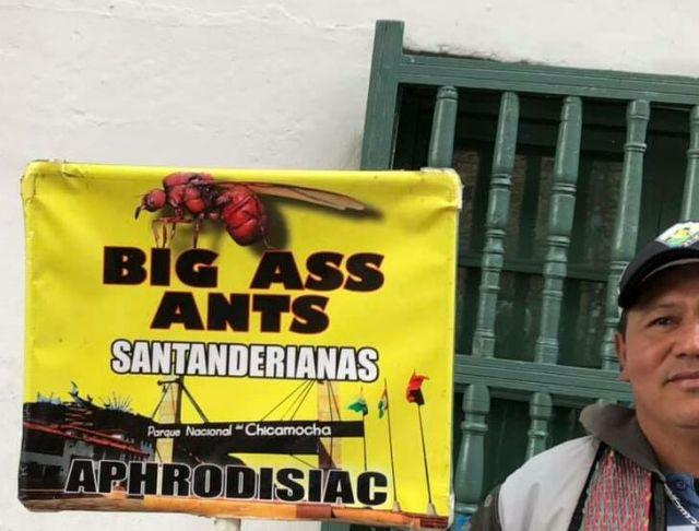 BigAssAntsFromKent