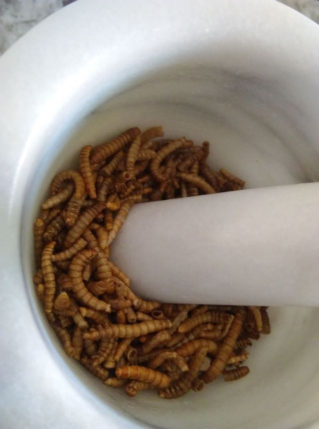 2mealworms